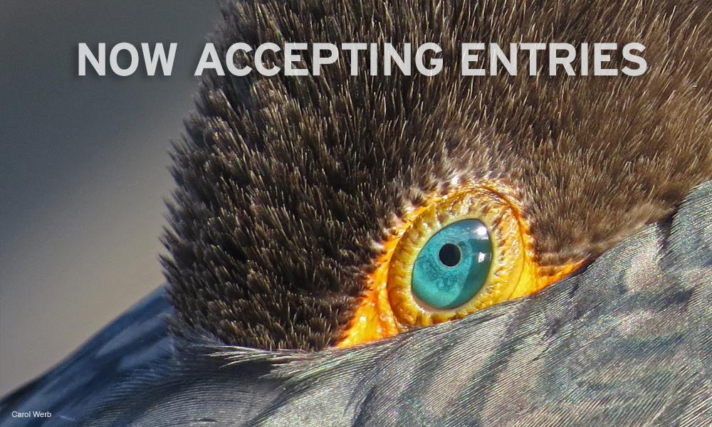 National Wildlife Photo Contest