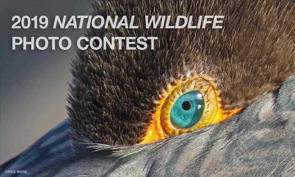 National Wildlife Photo Contest